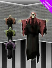 Hanging Hooded Skeleton - 4 Colours Halloween Decoration Spooky Party