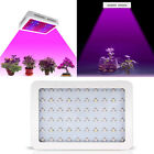 600W/1000W Watt LED Grow Light Lamp Plants Flower Oganic Growing Full Spectrum