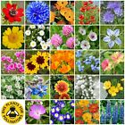 LiveMoor Wild Flower / Wildflower Seeds - Help Save the UK Bees - Various Sizes