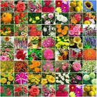 Spring Summer Variety garden flower Seeds Heirloom annual perennial 001-050