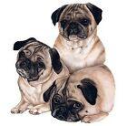 Three Pugs Shirt, Dog T-Shirt, Cute Snuggle Pugs, Small - 5X, Pug Breed