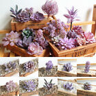 Artificial Succulent Faux Cactus Plastic Purple Plant Home Garden Decoration 1PC