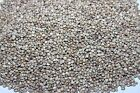 Large Hemp Seed - Top Quality Cleaned With Low Debris Content - Carp Fishing