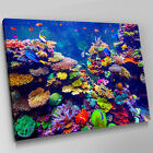 A601 Sea Life Multi Colour Coral Reef Canvas Wall Art Animal Picture Large Print