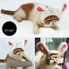 A053 Simulation Hair Dog Lion Mane Durable Puppy Toys Cat Cosplay Wig Plaything