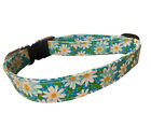 SPIFFY POOCHES Dog Cat Collar TURQUOISE DAISY ~BUY ONE GET ONE HALF PRICE~