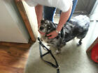 Hand Made Step In Dog Harness USA Made Easy Fit Comfortable On Dog