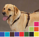 NYLON DOG HARNESS, Zack & Zoey, 11 Colors 4 Sizes! Easy to Use Adjustable, Puppy