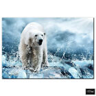 Animals Polar Bear   BOX FRAMED CANVAS ART Picture HDR 280gsm
