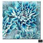 Floral Zinnia blue flower  BOX FRAMED CANVAS ART Picture HDR 280gsm