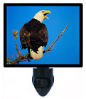 Night Light - Outraged - Bald Eagle - Birds - Patriotic