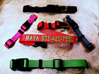 """Personalized Embroidered Adjustable Dog Collars 1"""" , 3/4"""", 5/8"""" Wide Heavy Nylon"""