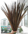 10/50/100/200pcs beautiful natural pheasant tail feathers 25-80cm / 10-32inches