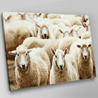A300 Farm Animal Herd Of Wooly Sheep Canvas Wall Art Animal Picture Large Print