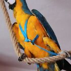 Parrot harness, seams strength TESTED, XS, S, M, L sizes