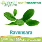 earthessence RAVENSARA ~ CERTIFIED 100% PURE ESSENTIAL OIL ~ Therapeutic Grade
