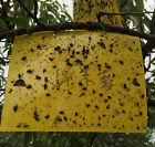 1/5x Yellow Sticky Insect Attract Killer Kill Fly Thrip Fruitfly Gnat Leafminer