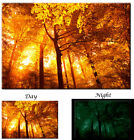 Sun Tree Autumn Forest Sunset Nature Forest - Glow in the Dark Canvas Art Print