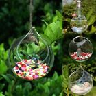 3X Clear Plant  Hanging Vase Flower Terrarium Container Glass Pot Wedding Decor