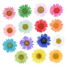 30 Pcs Pressed Dried Flowers Daisy Petals Nothirdtime DIY Epoxy Floral Craft