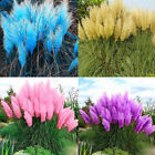 Внешний вид - 1000Pcs Pampas Grass Seeds Cortaderia Selloana Flower Rare Reed Garden Plant #