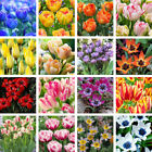 3Pcs Tulip Bulbs Seeds Beautiful Flower Home Garden Plant Decoration Flowery