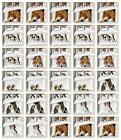 Beagle Duvet Cover Set Twin Queen King Sizes with Pillow Shams Bedding
