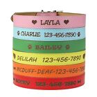 Customized Boy/Girl Dog Collar with Name - Personalized Custom Engraved Leather