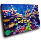 A601 Sea Life Coral Reef Fish Funky Animal Canvas Wall Art Large Picture Prints
