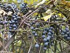 Fruit Plant & Tree Seeds Big Selection -You Can Choose Whatever Variety You Want