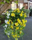 Artificial Hanging Basket Yellow White Morning Glory Flowers Ivy Leaf Fern Folia