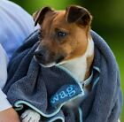 The Amazing Henry Wag DOG DRYING TOWEL - A MUST HAVE IN WINTER!  SIZES S or L