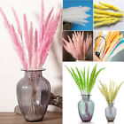 15pcs Natural Dried Flower Bunch Bunny Tail Pampas Grass Reed Home Weeding Decor