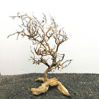 Driftwood Tree Aquarium Moss Fish Tank Ornaments Landscaping Bonsai Decor Art