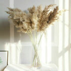 Natural Dried Pampas Grass Reed Flower Bunch Bouquet Home Wedding Decor