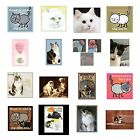 Cat Magnet Calico Grey White Siamese Kittens Silliy Choose Favorite Cat Picture