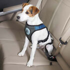 Dog Is Good Dog Pet Car Harness Seatbelt Padded Chest Mesh Belt Attachment Blue