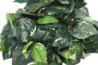 Repta Vine 6' Terrarium Silk Like Plant Red, Purple Coleus, Pothos, Ivy 6 ft