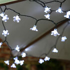 50 OR 100 LED, 5M OR 10M SOLAR POWER OUTDOOR GARDEN PARTY BLOSSOM FAIRY LIGHTS