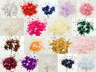 Babies Breath Flower - 72 pack - Various Colours - Wedding Decor Craft
