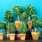 Indoor Artificial Plants Trees Small Mini Potted Plastic Home Decor Table Faux