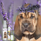 Is Your Bloodhound Afraid of Thunder? Fireworks? Try Relax Dog Aromatherapy