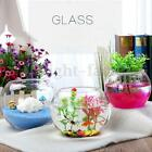 Round Clear Glass Vase Fish Tank Ball Bubble Bowl Planter Terrarium Decor Home