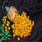 Yellow Currant Petite Tomato Seeds TINY Fruits are produced in abundance