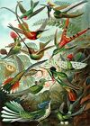 HUMMINGBIRDS- Art of the British Empire As Premium Linen Blend Tapestry