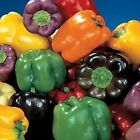 Gourmet Rainbow Mix Sweet Bell Peppers F1 Hybrid Seeds salads stuffing and cook!