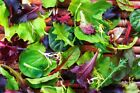 Mesclun Blend Lettuce & Greens Mix Seeds - For the tastiest salads ever!!!