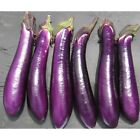 Purple Shine Hybrid Eggplant Seeds - a popular Chinese type eggplant variety.!!