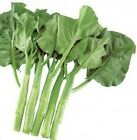 Ryokuho Hybrid Seeds - also known as kailaan or Chinese broccoli.  TASTY!!!!!