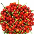 Wiri Wiri Hot Pepper Seeds -  A variety from Guyana.  Very Hot!!!!!!!